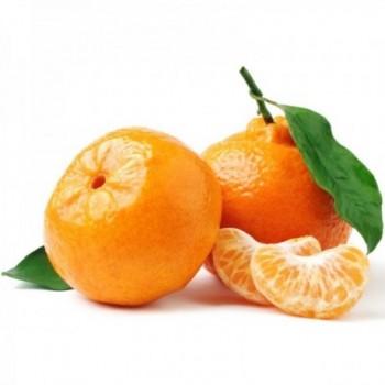 Mandarina x Lb