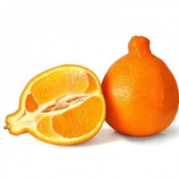 Naranja Tangelo x Lb