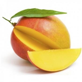 Mango Tomy x Lb